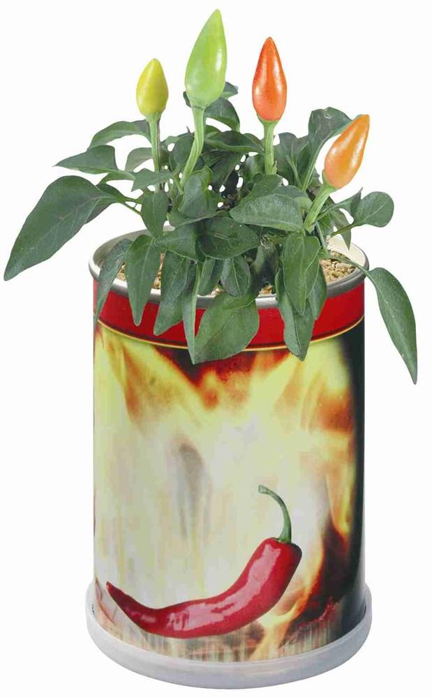 Bild Blumendose Hot Ø 65 x 90 mm, Chili