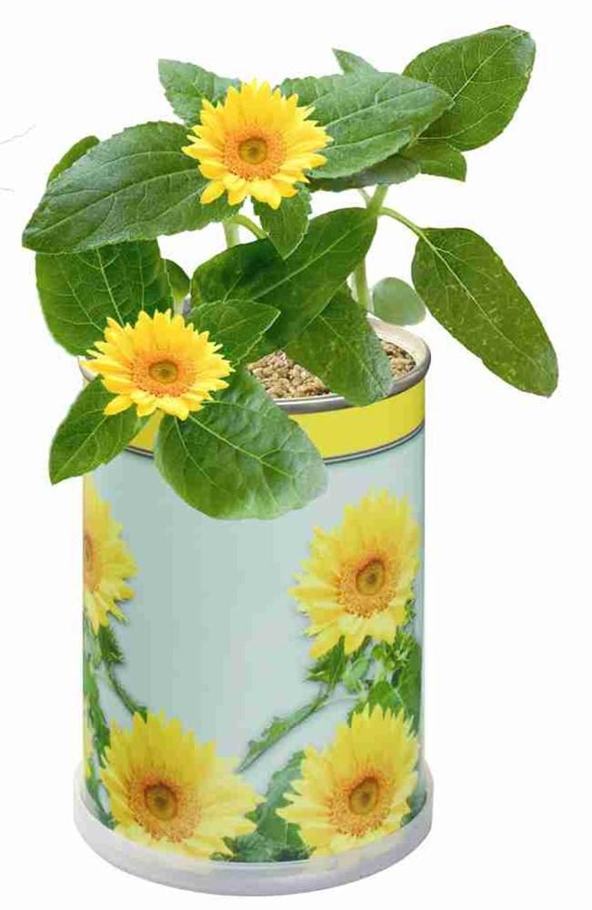 Bild Blumendose Sonne Ø 65 x 90 mm, Zwergsonnenblume