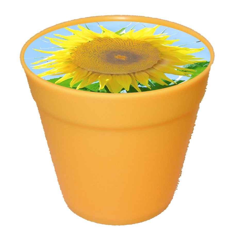 Bild Business-Töpfchen Sonne, Zwergsonnenblume, 1-4 c Digitaldruck inklusive