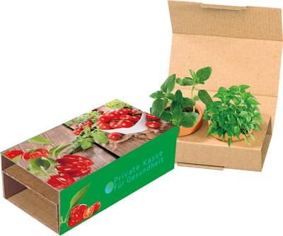 Bild Naschgemüse-Duo, Cocktail Tomate und Paprika, 1-4 c Digitaldruck inklusive