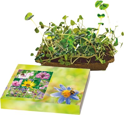 Bild Bienenfreude, Bienenwiesen-Mischung, 1-4 c Digitaldruck inklusive