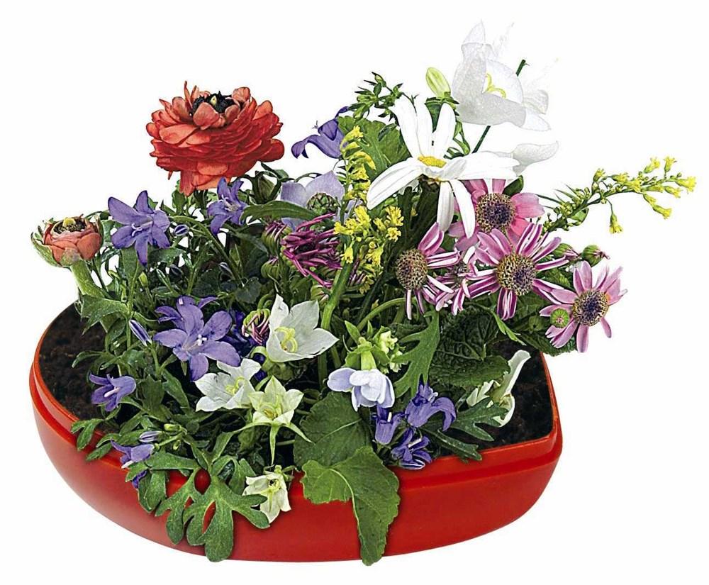 Bild Blumen-Herz, bunte Blumenmischung